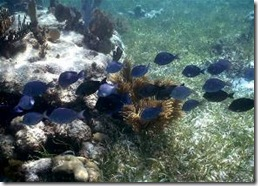 La vie sur La barriere de Corail a Puerto Morelos