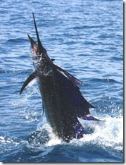 Pesca_Excu2
